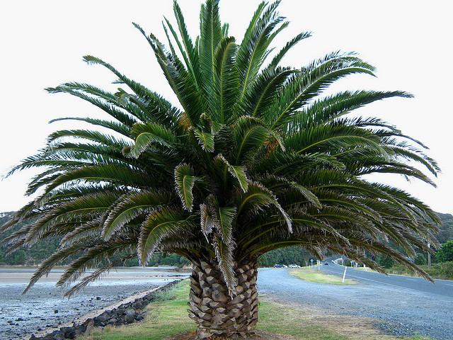 Egzotikus növények